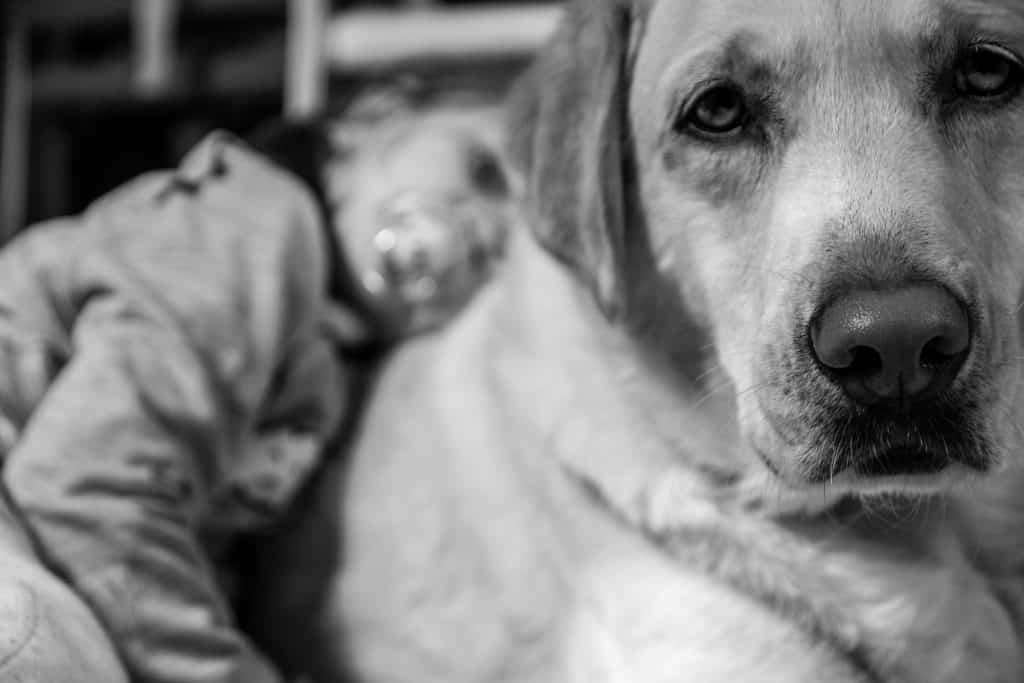 Familjens hund